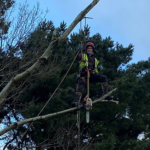 Thane, arbortist for Weymouth Town Council